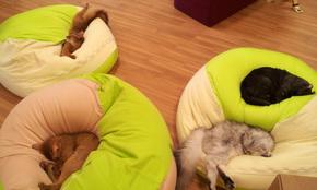 トモカフェのおやすみ猫たち