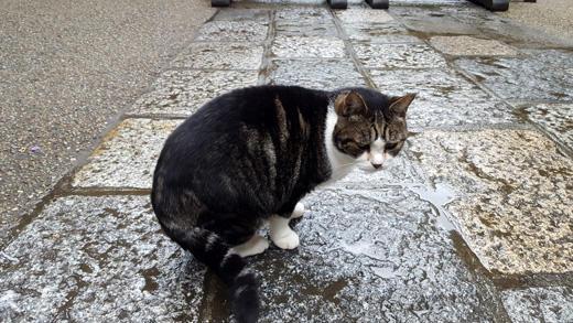 円覚寺の猫(北鎌倉)